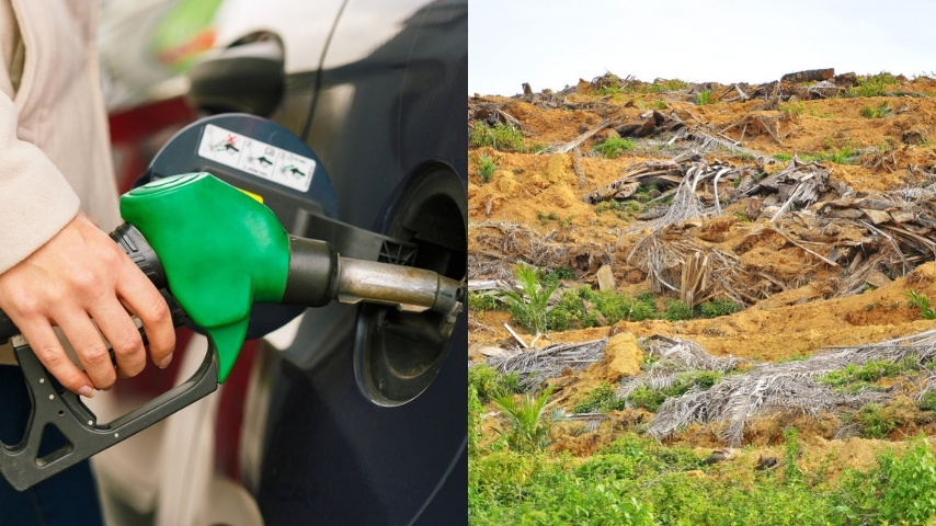 L'olio di palma è utilizzato nei motori, il 95% dei biodiesel proviene da qui